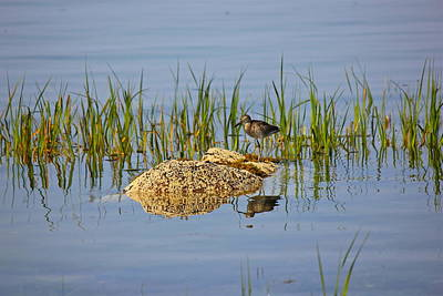 Photograph - Sandpiper by Amazing Jules