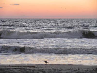 Photograph - Sandpiper At Sunrise by Ellen Meakin