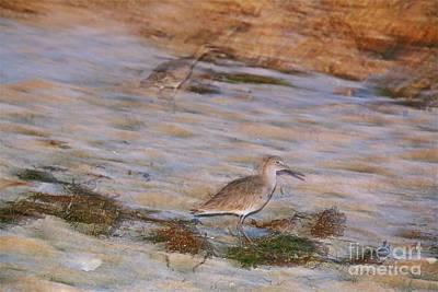 Sandpiper Digital Art - Sandpiper Beach Scape by Heidi Peschel