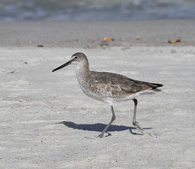 Beach Photograph - Sandpiper by Cathy Lindsey