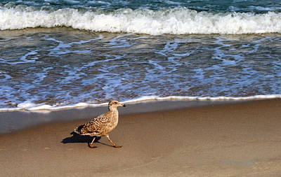 Photograph - Sandpiper At Ortley Beach, Nj by Femina Photo Art By Maggie