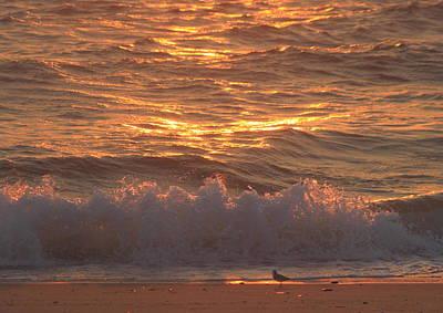 Photograph - Sandpiper Feeding On Cape Cod Beach by John Burk