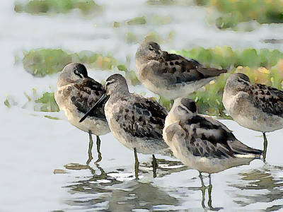 Sea Birds Painting - Sandpiper Group Napping At The Shoreline by Elaine Plesser