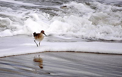 Photograph - Sandpiper In The Surf by AJ  Schibig