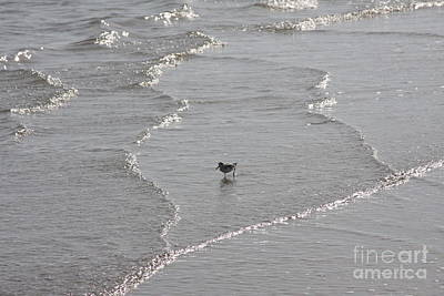 Photograph - Sandpiper In Water by Jerry Bunger