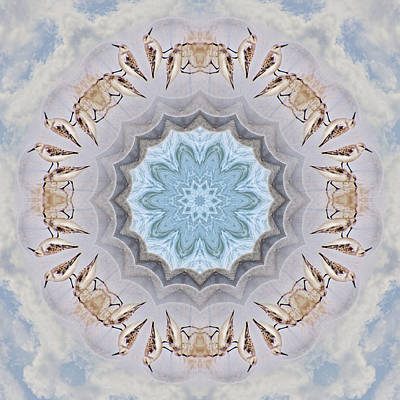 Photograph - Sandpiper Mandala by Beth Sawickie