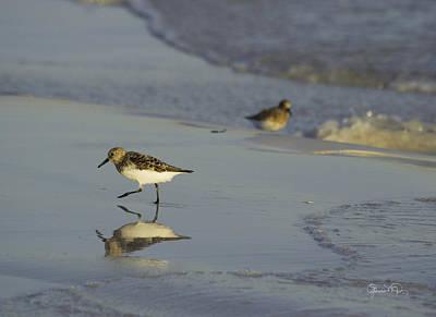 Photograph - Sandpiper Mirror II by Susan Molnar