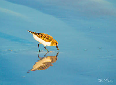 Photograph - Sandpiper Mirror by Susan Molnar
