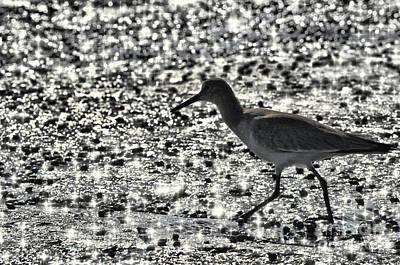 Photograph - Sandpiper On A Beach by Dan Friend