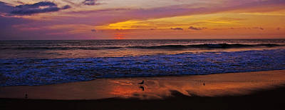 Art Print featuring the photograph Sandpiper On The Beach by John Harding