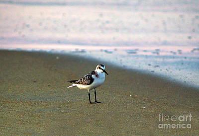 Photograph - Sandpiper by Patricia Griffin Brett