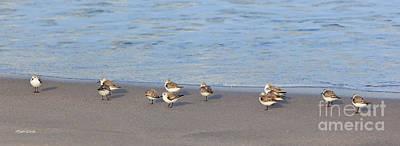 Sandpiper Photograph - Sandpiper Siesta by Michelle Wiarda