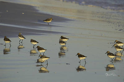 Photograph - Sandpiper Sunset Reflection by Susan Molnar