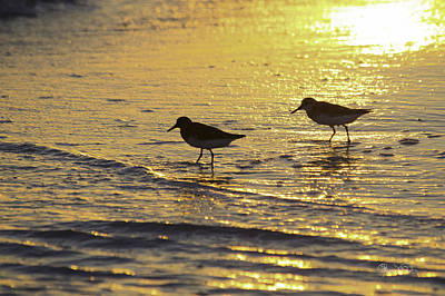 Photograph - Sandpiper Sunset by Susan Molnar