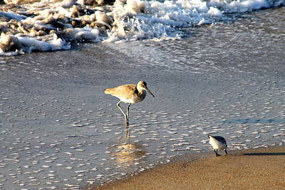 Photograph - Sandpiper2 by Lawrence Scott