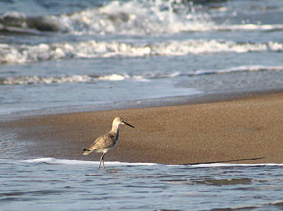 Photograph - Sandpiper3 by Lawrence Scott