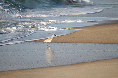 Photograph - Sandpiper4 by Lawrence Scott