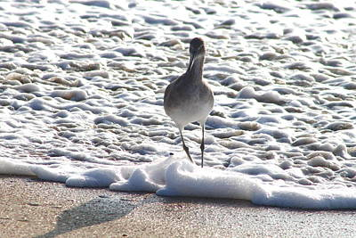 Photograph - Sandpiper5 by Lawrence Scott