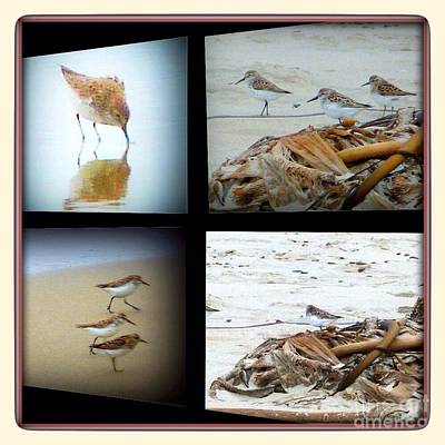 Photograph - Sandpipers Collage  by Susan Garren