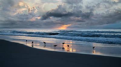Sandpipers In Paradise Art Print by Betsy Knapp