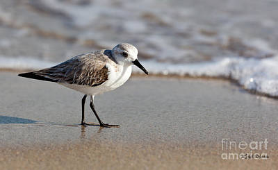 Photograph - Sandpipers Secrets by Michelle Constantine
