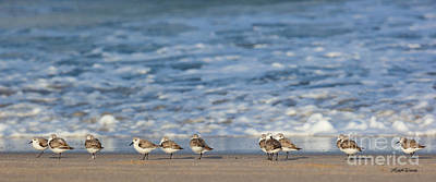 Photograph - Sandpipers Sleeping By The Sea by Michelle Wiarda-Constantine