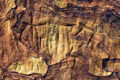 Photograph - Sandstone Abstract - D001308 by Daniel Dempster