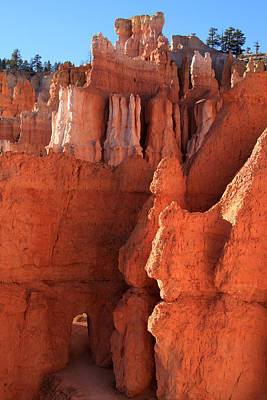 Photograph - Bryce Canyon Gateway   by Aidan Moran