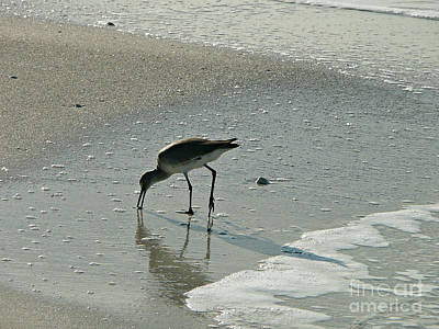 Photograph - Sandy Beach Bird Walk by Rachel Gagne