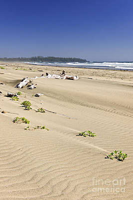 Vancouver Island Photograph - Sandy Beach On Pacific Ocean In Canada by Elena Elisseeva