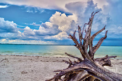 Sanibel Island Driftwood Art Print by Timothy Lowry
