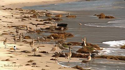 Santa Barbara Painting - Santa Barbara Harbor Birds by Barbara Snyder