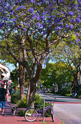 Photograph - Santa Barbara Spring by Marie Hicks