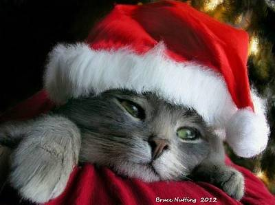 Kitten Painting - Santa Claws by Bruce Nutting