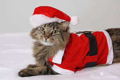 Photograph - Santa Claws  by Kimber  Butler