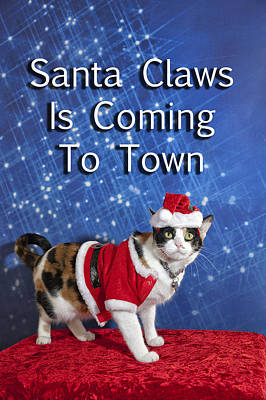 Photograph - Santa Claws by Melany Sarafis