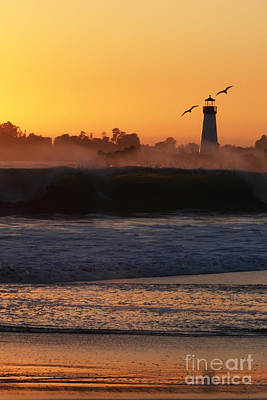 Photograph - Santa Cruz Harbor Lighthouse With Birds by Paul Topp