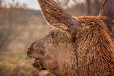 Photograph - Santa Elk by LeeAnn McLaneGoetz McLaneGoetzStudioLLCcom