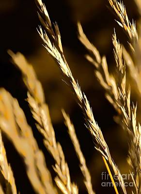 Digital Art - Santa Fe Grass 2 by Tim Richards