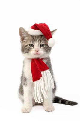 Christmas Eve Photograph - Santa Kitten by Greg Cuddiford