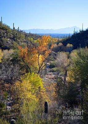 Coronado National Forest Photograph - Santa Ritas From Sabino Canyon by Rincon Road Photography By Ben Petersen