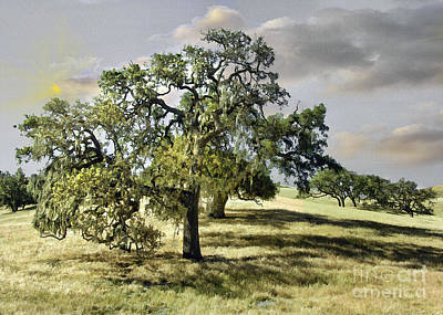 Photograph - Santa Ynez Oaks by Sharon Foster