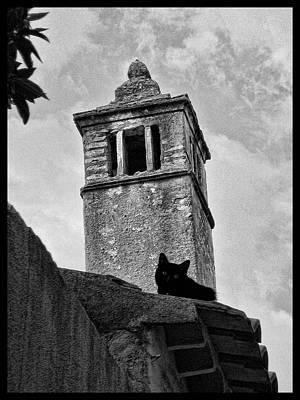 Photograph - Santarem Cat by Menega Sabidussi