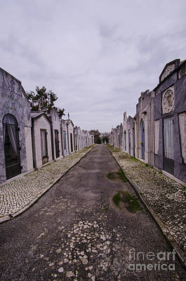 Photograph - Sao Joao Cemetery Street by Deborah Smolinske