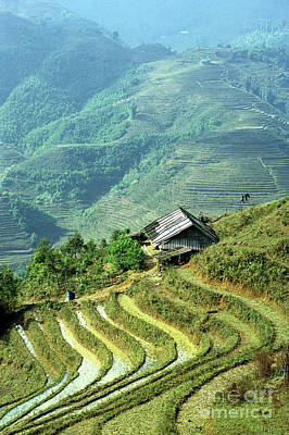 Photograph - Sapa Rice Fields by Rick Piper Photography