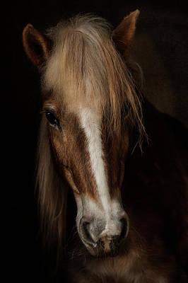 Horse Mane Photograph - Sapience by Martine Benezech