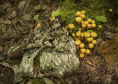 Photograph - Sapsucker Works And Mushrooms by Christopher Burnett