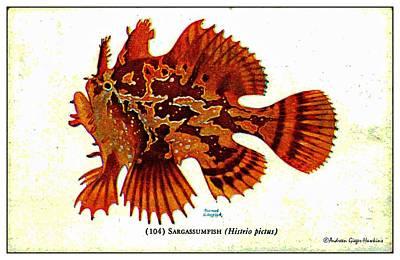 Digital Art - Sargassumfish 1932 Vintage Postcard by Audreen Gieger