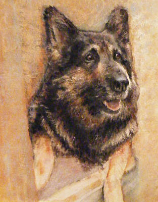 Painting - Sasha German Shepherd by Richard James Digance