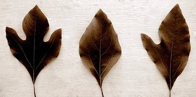 Photograph - Sassafras Leaves In Sepia by Michelle Calkins
